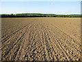 TL6455 : Maize field by Hugh Venables