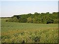 TL6555 : Bushy Grove by Hugh Venables
