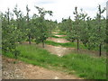 TQ7140 : Footpath in Plum Orchard by David Anstiss