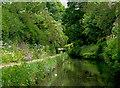 "SJ9003 : Marsh Lane ""Narrows"", near Wolverhampton by Roger  Kidd"