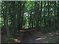 TQ5064 : Footpath in Upper Beechen Wood by David Anstiss