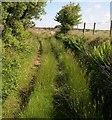 SN4547 : Bridleway to Bryngwyn : Week 24