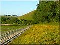 SU0122 : Field/woodland edge 2 : Week 24