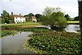 TQ6541 : Lily pads, Matfield pond, Matfield Village Green : Week 24