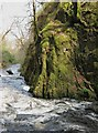 NS4702 : Wall of the gorge in Ness Glen by Ann Cook