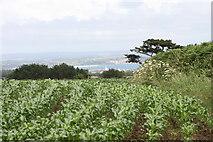 SW4329 : View across the field by Elizabeth Scott
