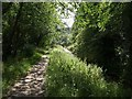 SX0049 : Path by St Austell River by Derek Harper