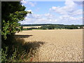 TL2301 : Farmland off the B556 Mutton Lane, Potter Bar by Adrian Cable