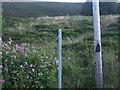 SD9707 : Public footpath to Badger Edge by Glyn Drury