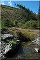 SH8012 : Stream in the Dyfi Forest : Week 34