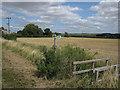 TL6956 : Cambridgeshire doing its bit by Hugh Venables