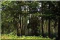 SU7497 : Aston Wood by Steve Daniels