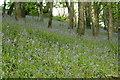 SX2457 : Bluebells near Treworgey by Tim S Addison