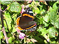 SW9138 : Red Admiral butterfly (Vanessa atalanta) by Rod Allday