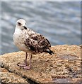 SW8132 : Falmouth resident : Week 35