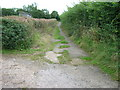 ST7067 : Green lane above Coombe Barn by James Ayres