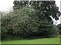NS5751 : Motte Hill by Kenneth Mallard