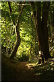 SU9848 : Through the Woods Near Guildford, Surrey : Week 39