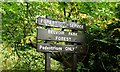 J3369 : Belvoir forest, Belfast (4) by Albert Bridge