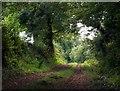 ST0625 : Summer Cleave Lane : Week 39