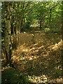 ST0825 : Footpath to Cobhay Moor Plantation : Week 39