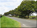 SJ7282 : A50 Near Hulme Barns Farm by Peter Whatley