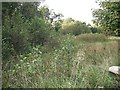 NS7761 : Woodland off Bo'ness Road by Richard Webb