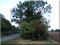 TF4310 : Tree and hedgerow on Gadd's Lane by Richard Humphrey