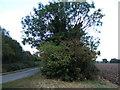 TF4310 : Tree and hedgerow on Gadd's Lane by Richard Humphrey