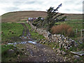 NG1643 : Track, wall and trees at Ramasaig by Richard Dorrell