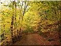 NY9460 : Path in Letah Wood : Week 43