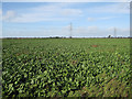 TL5880 : Sugar beet by Hugh Venables