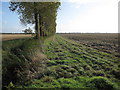 TL5880 : Windbreak on Fodder Fen by Hugh Venables