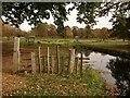 SP2556 : River Dene in Charlecote Park by Derek Harper