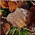 NN7923 : First frost : Week 45