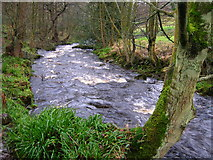 SE0024 : Cragg Brook below Spa Bridge by John Darch
