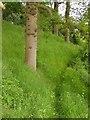 ST6264 : Footpath near Publow by Derek Harper