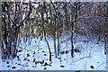 SU7497 : Snow in Aston Wood by Steve Daniels