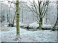SO6112 : Footbridge over the Cannop Brook - winter by Jonathan Billinger