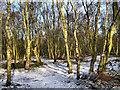 SJ7964 : Winter sun through the wood by Seo Mise
