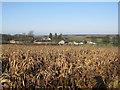TL6152 : Hall Farm, Weston Colville by Hugh Venables