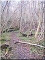 TR1052 : Footpath in Denge Wood by David Anstiss