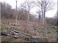 TR1051 : Coppiced Trees within Denge Wood by David Anstiss