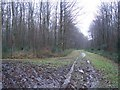TR1050 : Footpath and track junction in Denge Wood by David Anstiss