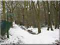 TQ4171 : Winter in Elmstead Woods (2) by Stephen Craven