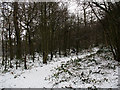 TQ4271 : Winter in Elmstead Woods (4) by Stephen Craven