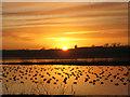 NK0026 : Newburgh: Eider ducks at sunset : Week 3