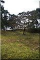 SJ7581 : Swan Clump - Tatton Park by Roger Gittins