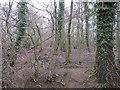 TL6356 : Woodland at Sluggs Green by Hugh Venables