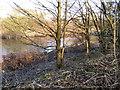 SD7706 : River Irwell by David Dixon